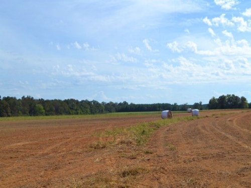 Crops & Timberland : Pansey : Houston County : Alabama