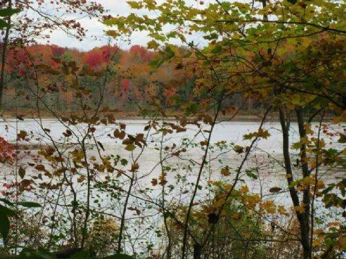 68 Acres Near Oneida Lake Woodlands : Altmar : Oswego County : New York