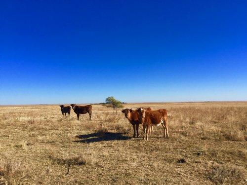 Rush Pasture : Rush : El Paso County : Colorado