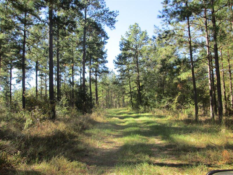 Planted Pine Plantation : Land for Sale : Hawkinsville ...