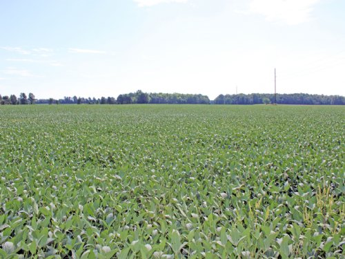 317 Acres Significantly Tiled : Unincorporated : Morrow County : Ohio