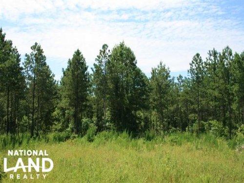 Little Washington Timber And Huntin : Blounts Creek : Beaufort County : North Carolina
