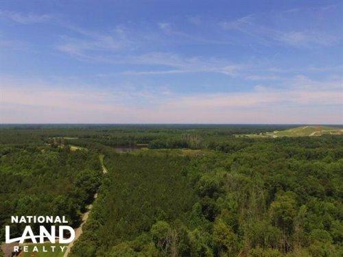 Aulander Timber And Hunting Tract : Aulander : Bertie County : North Carolina