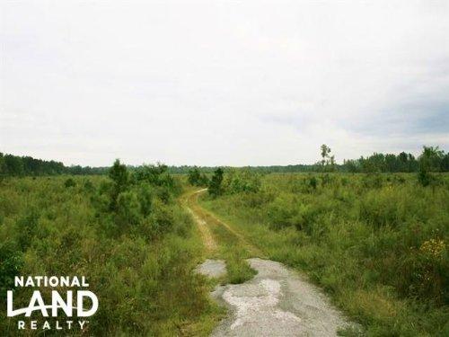 Meherrin River Large Acreage Timber : Murfreesboro : Hertford County : North Carolina