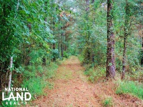Windsor Hoggard Mill Creek Hunting : Windsor : Bertie County : North Carolina