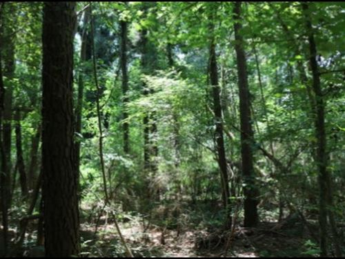 3.4 Acres In Neshoba County : Philadelphia : Neshoba County : Mississippi