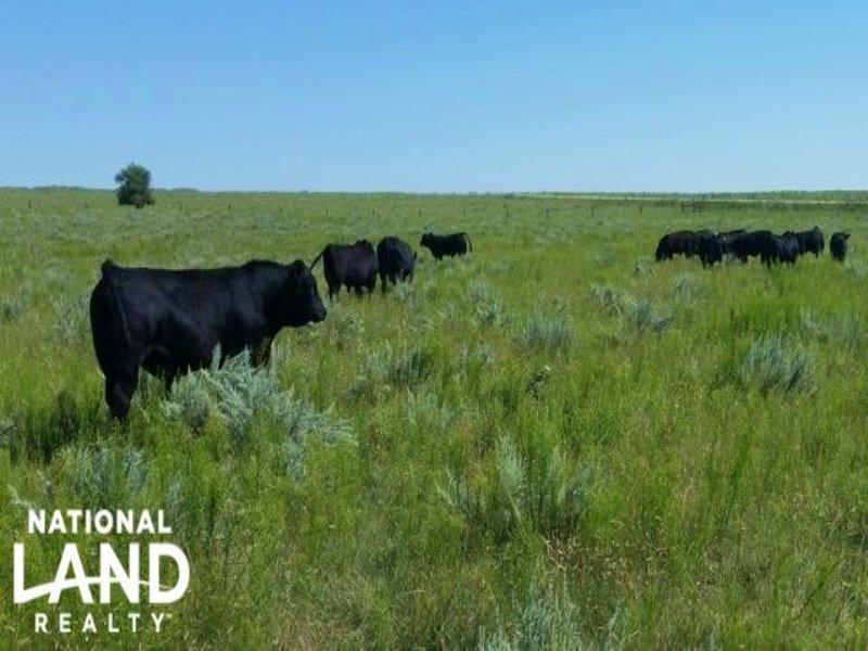 Eastern Colorado Ranch For Sale : Stratton : Kit Carson County : Colorado