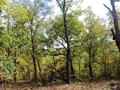 20.40 Acres - Eagle Point Rd : Barnett : Morgan County : Missouri