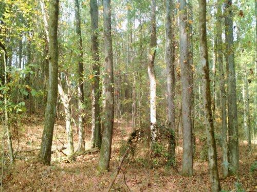 Cedar Ridge Road : Monroe : Walton County : Georgia