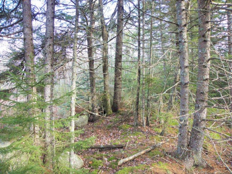Whitten Parritt Forest : Steuben : Washington County : Maine