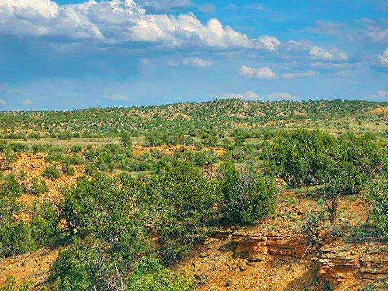 Quiet 37 Acre Wilderness Ranch : St. Johns : Apache County : Arizona