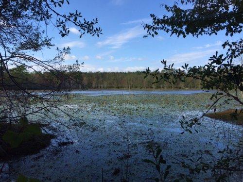 Spring Fed 8 Acre Lake : Rebecca : Turner County : Georgia
