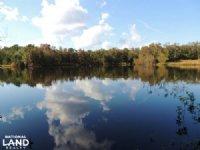 Little Salkehatchie River Hunting : Blackville : Bamberg County : South Carolina