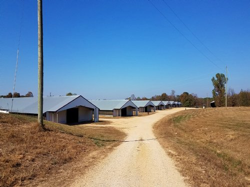 8 House Broiler Poultry Farm & Home : Hackleburg : Marion County : Alabama