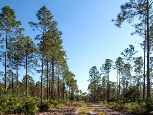 Hiers Recreation And Timber : Morriston : Levy County : Florida