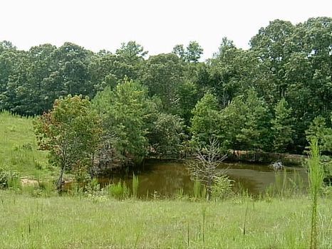68+/- Acres Pastureland/Timberland : Mellow Valley : Clay County : Alabama