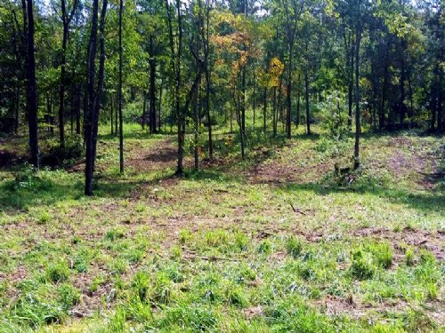 30 Acres Great For Hunting : Jadwin : Dent County : Missouri