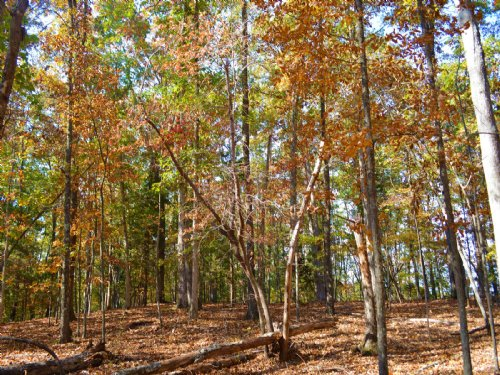 Wooded Home Sites In Pauline, Sc : Pauline : Spartanburg County : South Carolina