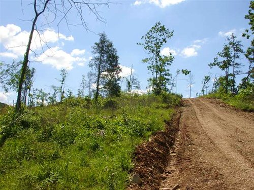 22.48 Acres Antler Ridge : Midridge : Shannon County : Missouri