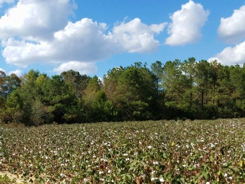 Productive Farm & Timberland : Columbia : Houston County : Alabama