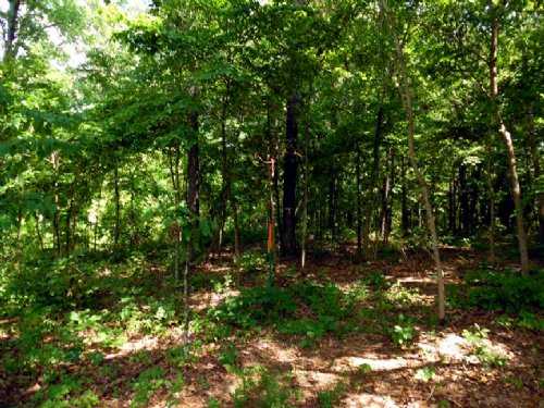 18 Acres A Mile From The Big Piney : Licking : Texas County : Missouri