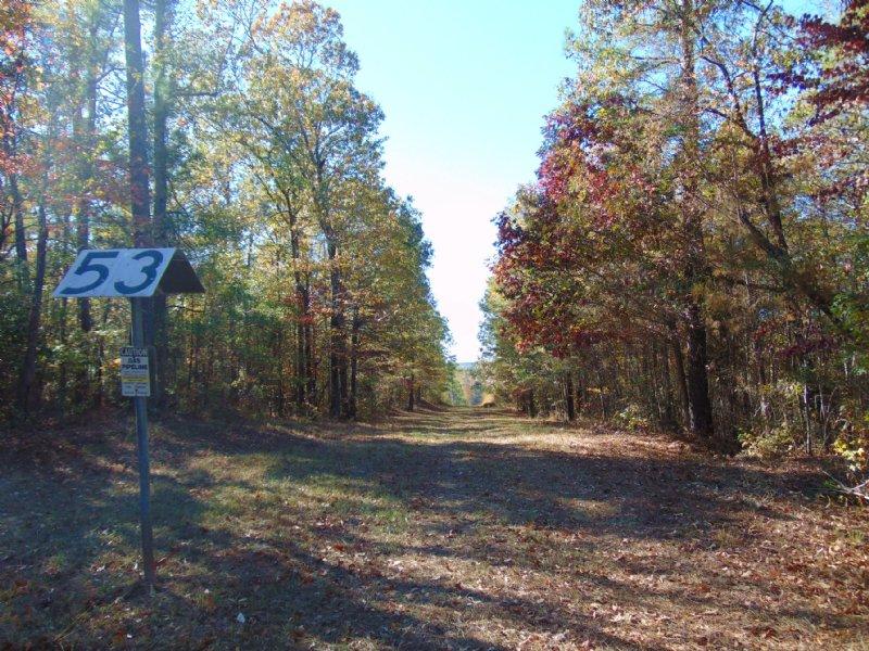 Bullard Hills North Tract A : Jeffersonville : Twiggs County : Georgia