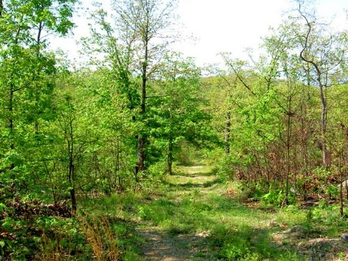 9.7 Acre Property On Forest : Vanzant : Douglas County : Missouri