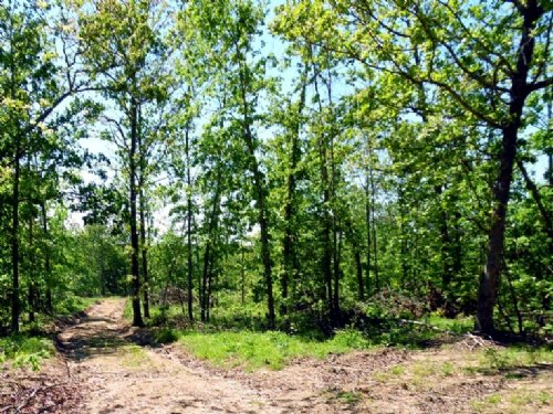 78 Acre Property Great For Hunting : Jadwin : Dent County : Missouri