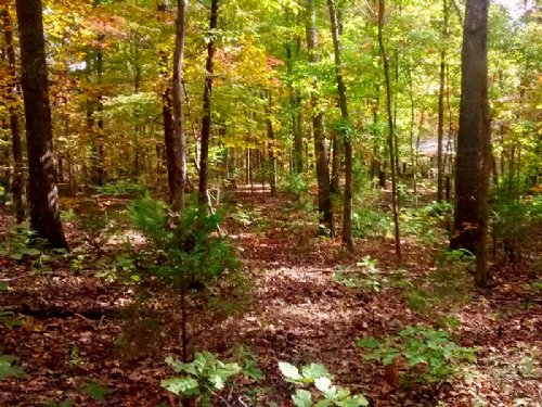 Wooded Lots Within 2 Miles Of Lake : Ozark Acres : Sharp County : Arkansas
