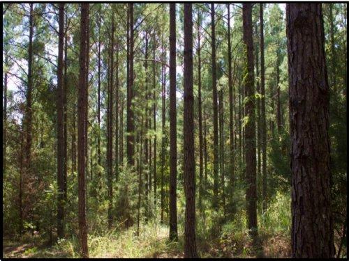 202 Acres In Attala County : Kosciusko : Attala County : Mississippi