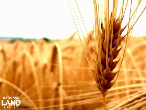 Farm Ground Cropland For Sale : Cheyenne Wells : Cheyenne County : Colorado