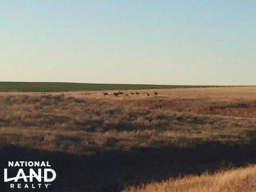 Cheyenne County Cropland For Sale : Cheyenne Wells : Cheyenne County : Colorado