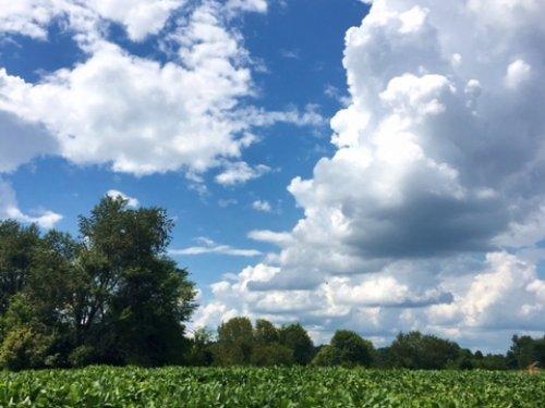 46.29 Ac Farm : Bowling Green : Warren County : Kentucky