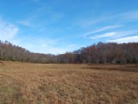 115 Acres Of Prime Hunting Land : Crossville : Cumberland County : Tennessee