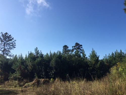 160 Acres - Hwy 43 : Poplarville : Pearl River County : Mississippi