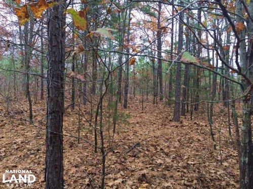 10+/- Acres Of Timberland And Deer : Botkinburg : Van Buren County : Arkansas