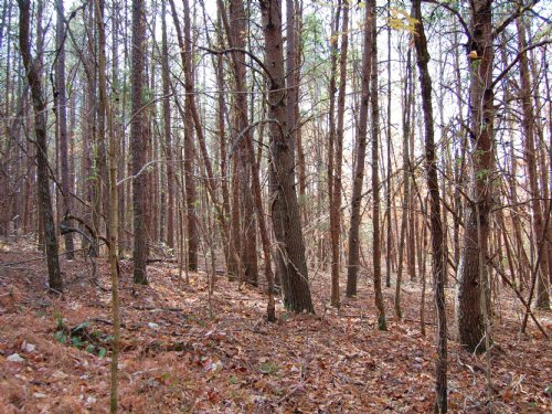 46 Acres In Bledsoe County : Dunlap : Bledsoe County : Tennessee