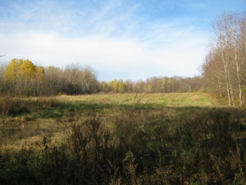 18 Acres Borders Forest Near Lake : Summerhill : Cayuga County : New York
