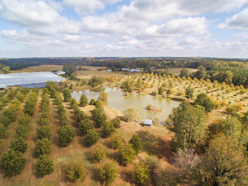 Poultry, Pecan Farm W/wedding Venue : Vinemont : Cullman County : Alabama