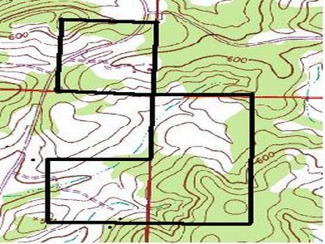 145 Acres of Timber & Hunting Land : Talladega : Talladega County : Alabama