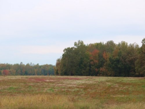 Bell Acres - 4.68 Acre Lot : Morrison : Coffee County : Tennessee