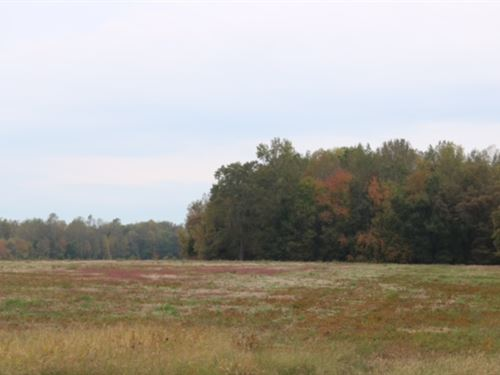 Bell Acres, 5.58 Acre Lot : Morrison : Coffee County : Tennessee