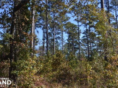 39+/- Acre Natural Re-Growth Timber : Lacey : Drew County : Arkansas