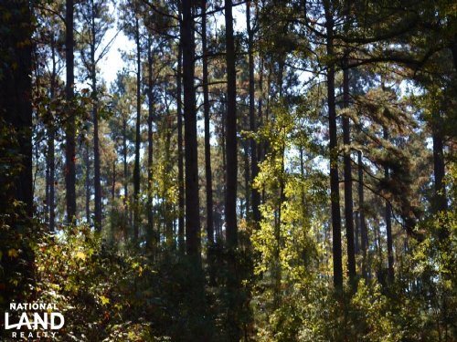 140 Acres Pine Plantation Timber : Lacey : Drew County : Arkansas