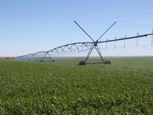 Boss Cattle Ranch : Chappell : Deuel County : Nebraska