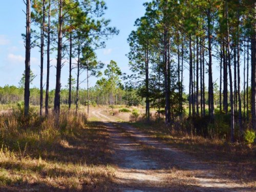 Lg 286 Chiefland : Chiefland : Levy County : Florida
