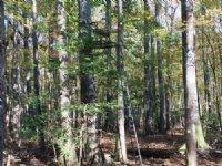 Freeman Estate Land Property : McIntyre : Wilkinson County : Georgia