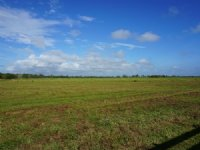 Circle G Ranch 298 Acres : Okeechobee : Okeechobee County : Florida