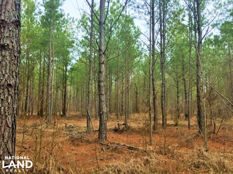 Lugoff Hwy 601 Recreational Acreage Land For Sale