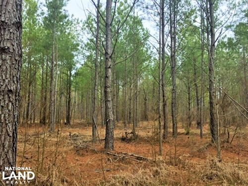 Lugoff Hwy 601 Large Acre Opportuni : Lugoff : Kershaw County : South Carolina